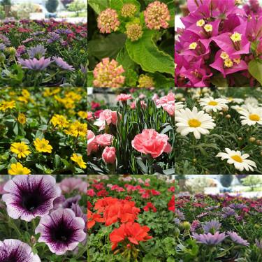 Garten- und Balkonpflanzen